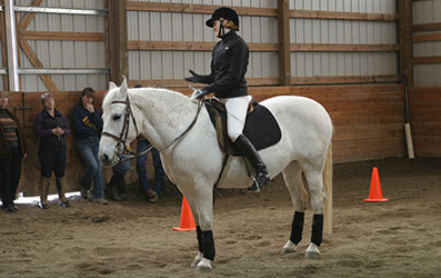 Mustangs in Dressage Demonstration