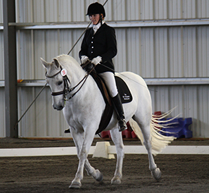 Mustang preforming a Dressage Freestyle