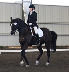 Westley Showing fourth level dressage